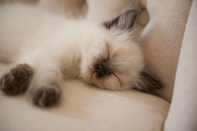 cute-3228801_640.jpg